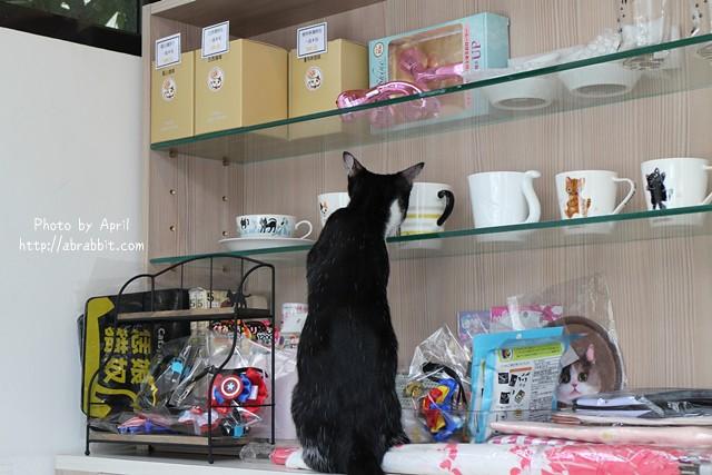 29768687740 3197909220 z - 【熱血採訪】[台中]朵喵喵咖啡館--愛貓人士請進,這裡是貓咪中途之家、台中貓餐廳、貓咖啡廳@東區 自由路(已歇業)