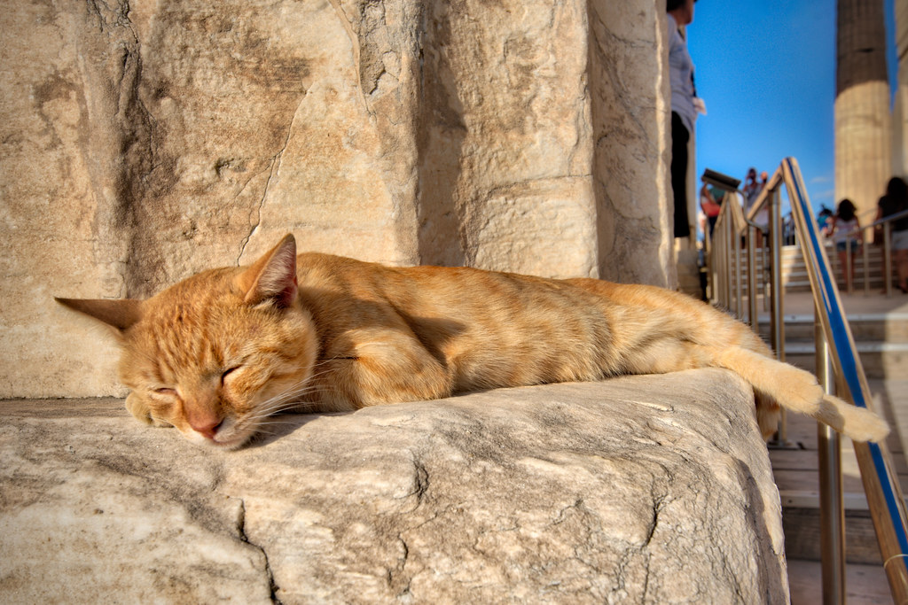 Sleepy Cat on the Propylaea
