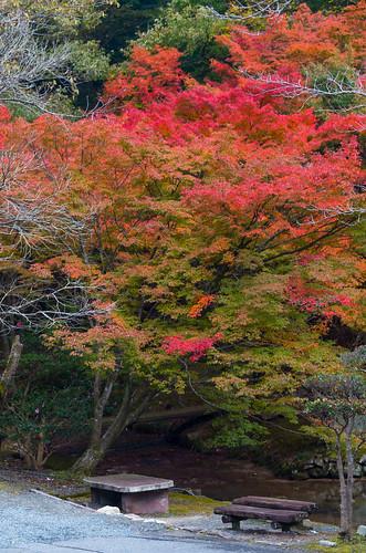 紅葉狩り - 東山公園 26