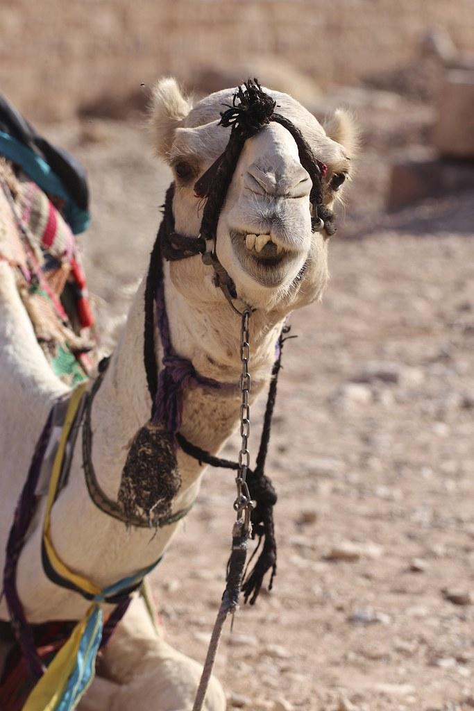 Jordanian matka, helppo ja turvallinen lomakohhde