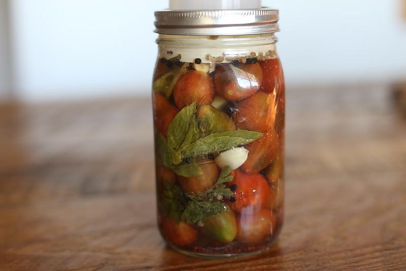 fermenting tomatoes
