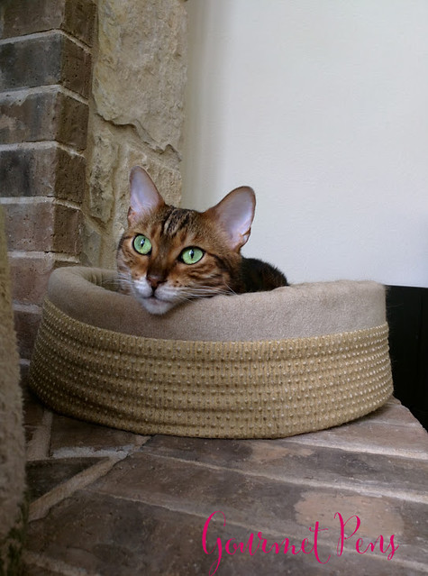 Whiskers & Paws July 2017 Edition 5