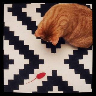 Hunt for red mouse, for #365days project, 298/365