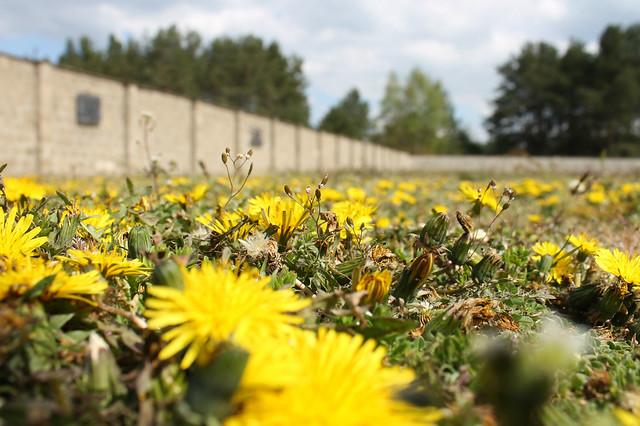 Sachsenhausen12