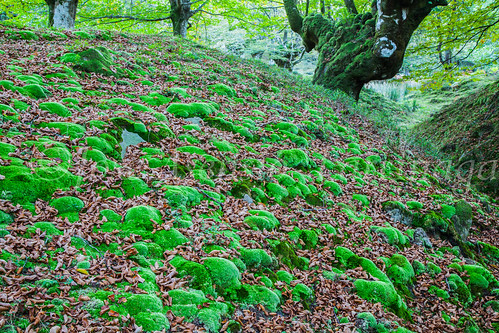Parque Natural de #Gorbeia #DePaseoConLarri #Flickr      -1340