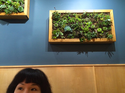 Hanging Succulents at The Stockpot (October 28 2015)