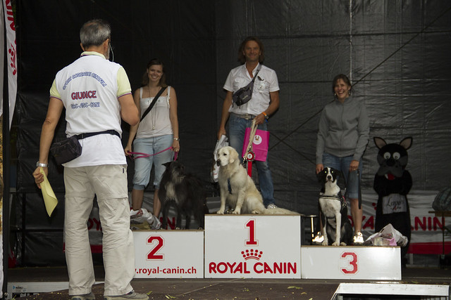 Sport Acquatici Cinofili - Splash Dog a Lugano