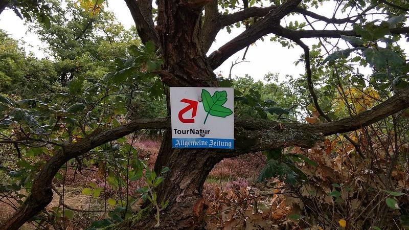 TourNatur: Auf zum Rotenfels