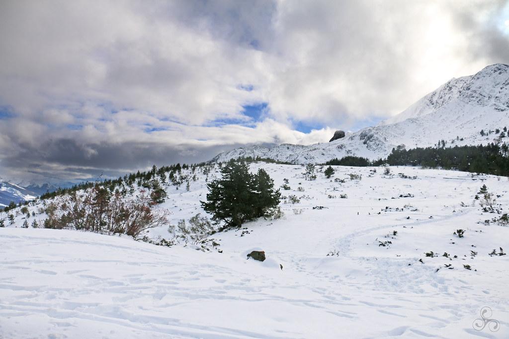 Winterland V
