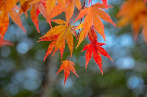 紅葉狩り - 東山公園 02