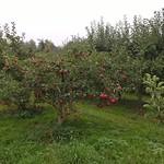 III d w sadzie