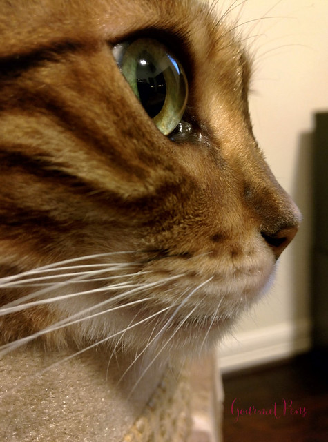 Whiskers & Paws August 2017 Edition 5