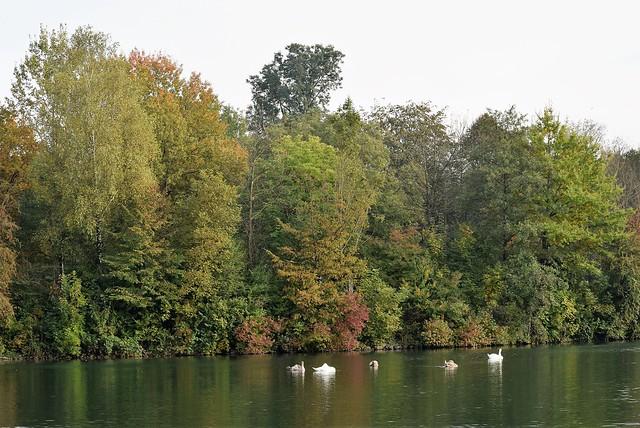 River Aar 16.10 (3)