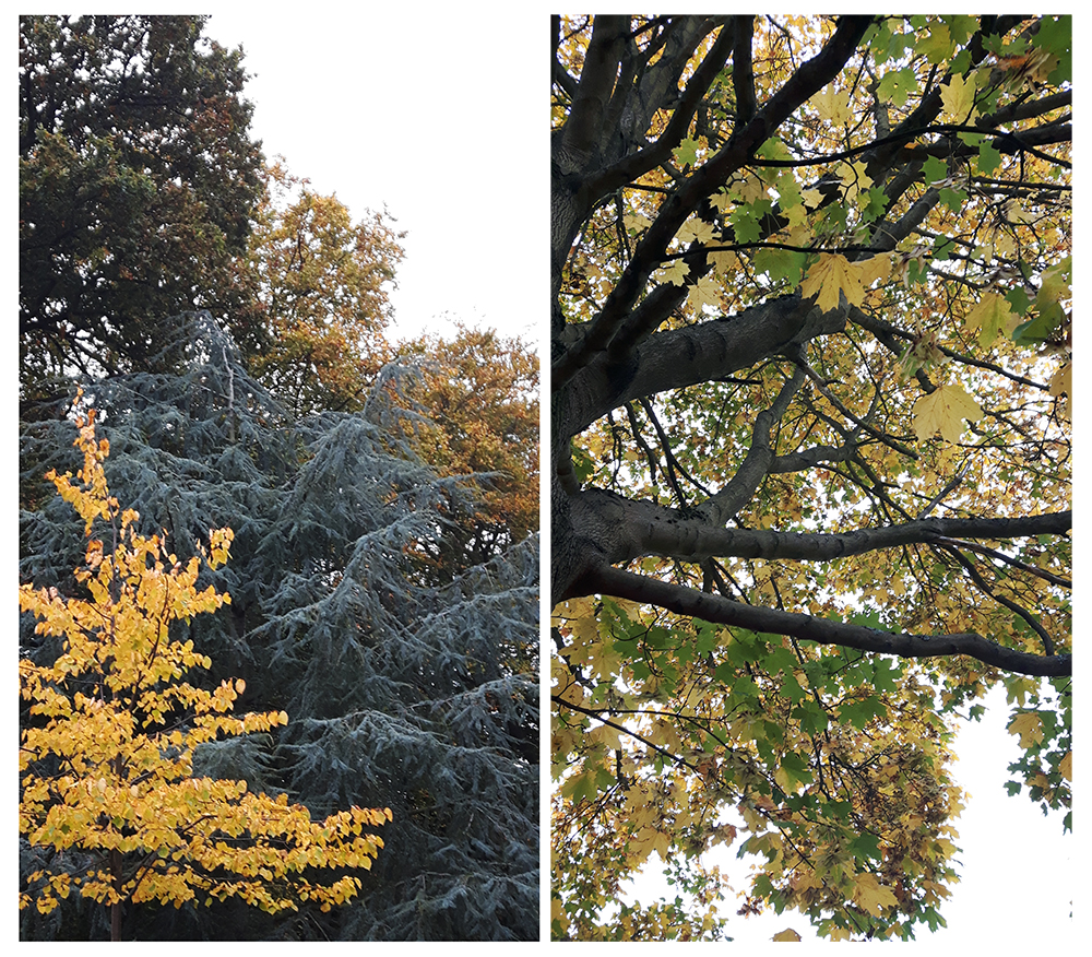autumn-leaves-trees-yellow