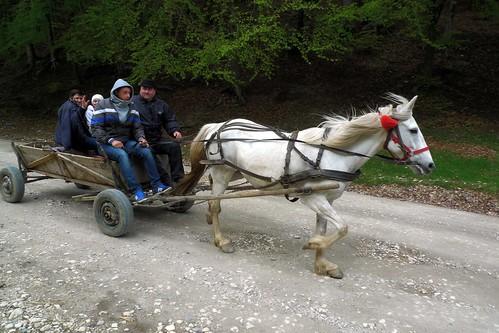 Horse Cart near Zarnesti, Romania