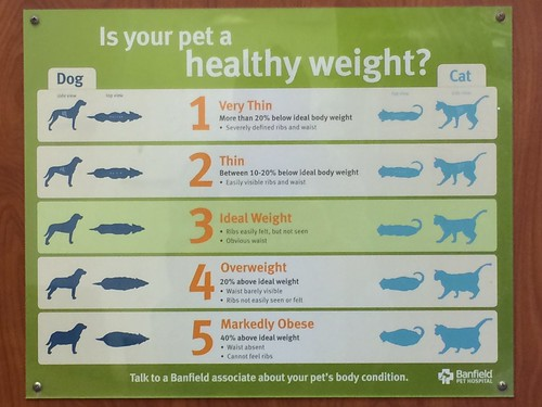 Is your pet a healthy weight?