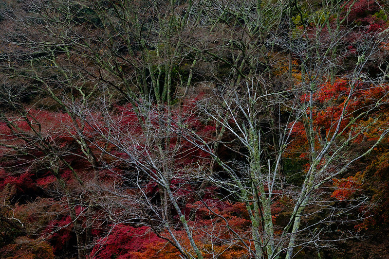 Autumn leaves scenery in Japan