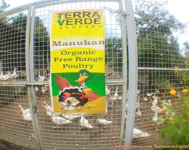 Terra-Verde-Organic-Free-Range-Chicken