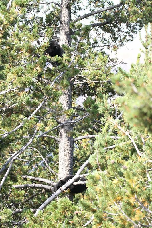 bears IMG_6235