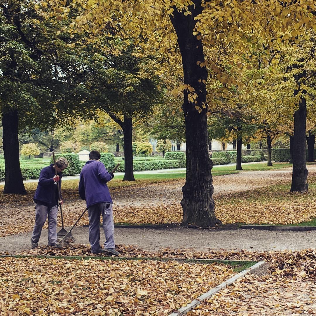 Les feuilles mortes // Autumn leaves