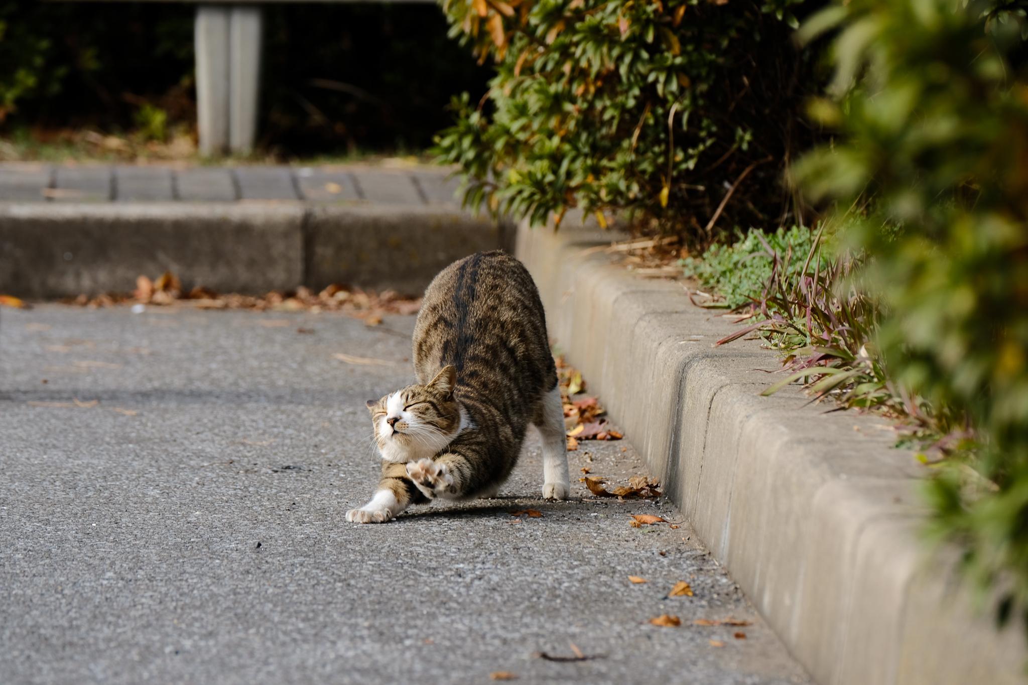 猫-2913.jpg