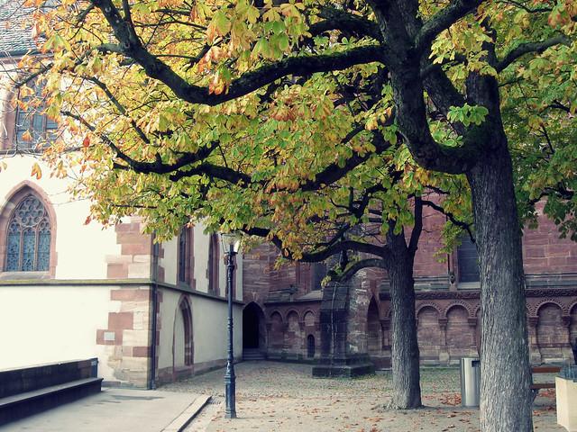 Pfalz am Münster
