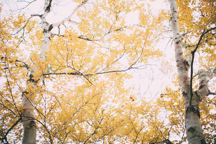 birches-22