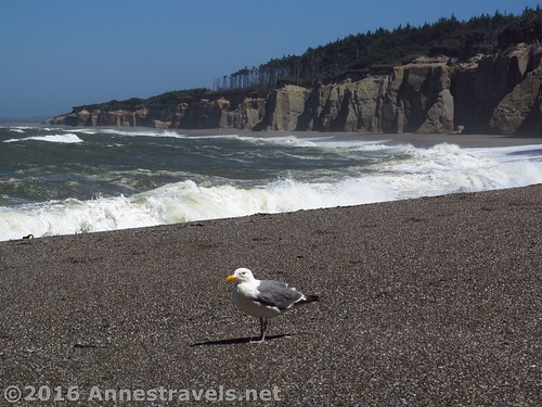 Cliffs along the southern end of Floras Lake Beach, Oregon
