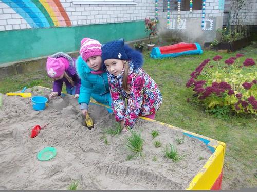 огород на песке