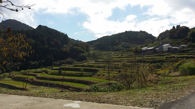 サイノカミ峠経由で長谷の棚田通ったけど日本棚田100選だけあって綺麗だわ。