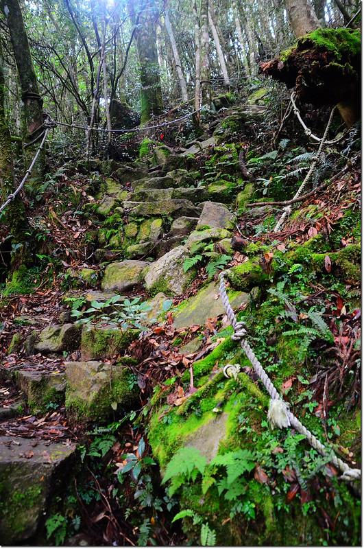 橫嶺山登山步道 1