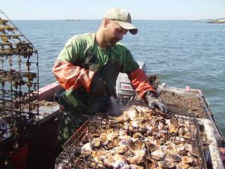 Shellfishing - Photo credit: Project GreenWave