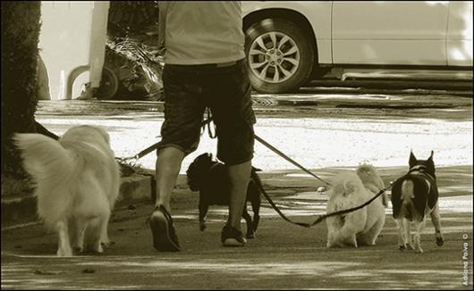 Cães passseiam