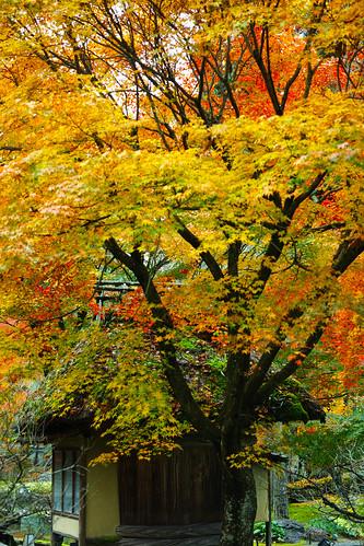 京都しょうざん庭園