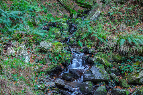 Parque Natural de #Gorbeia #DePaseoConLarri #Flickr      -1437