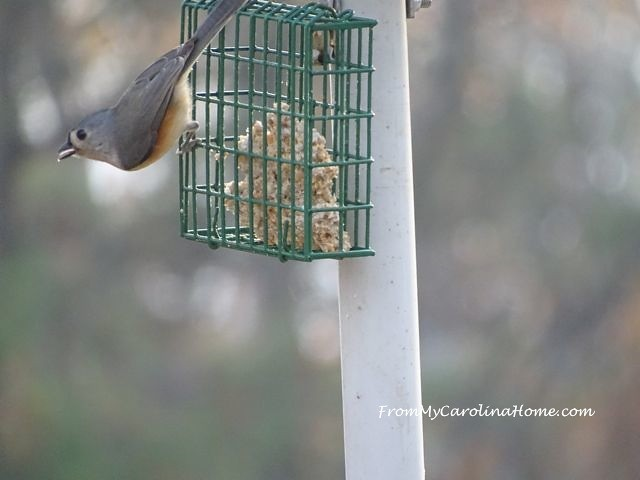 Bird feeder November 1