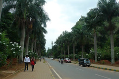 Bangalore - Cubbon Park way