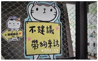 侯硐貓村-11