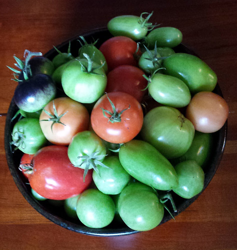 blue bowl full of tomatoes of varied sizes, shapes, and colors, mostly green