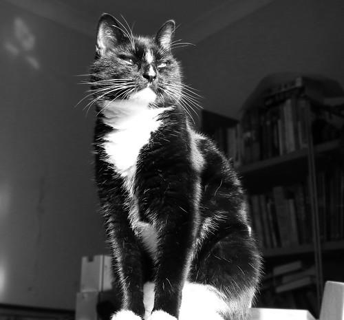 Handsomest cat