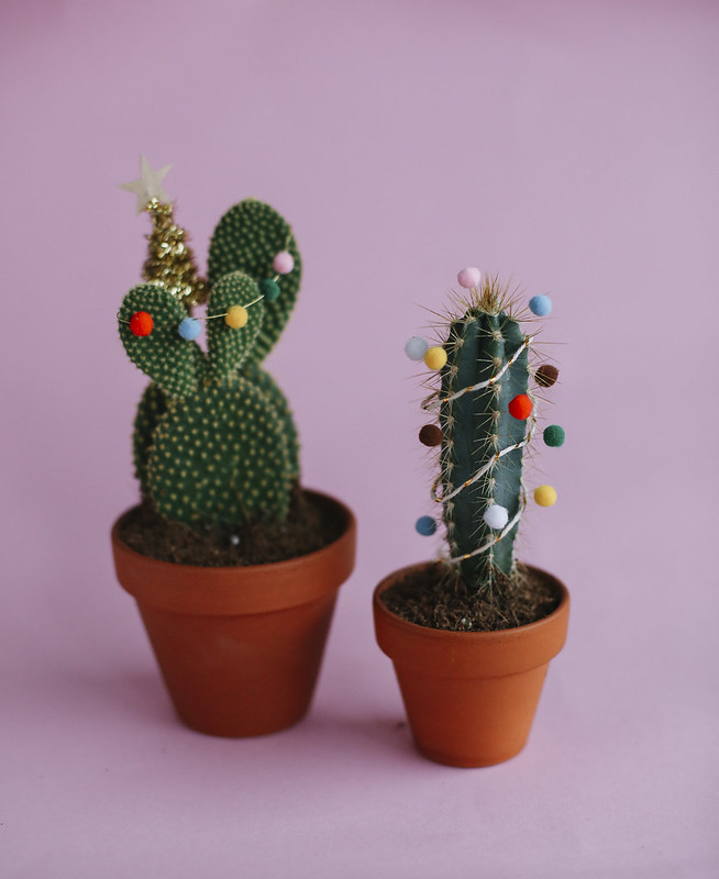 MB1_8858edB, thecurlyhead, amelie n., the curly head, still life photography, DIY, last minute gift idea, christmas-cacti, cacti, Geschenkidee, Weihnachtskaktus, Weihnachtskakteen, blog,