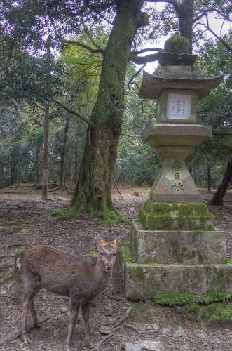 Kasuga Taisya Shrine on NOV 30, 2016 vol02 (8)