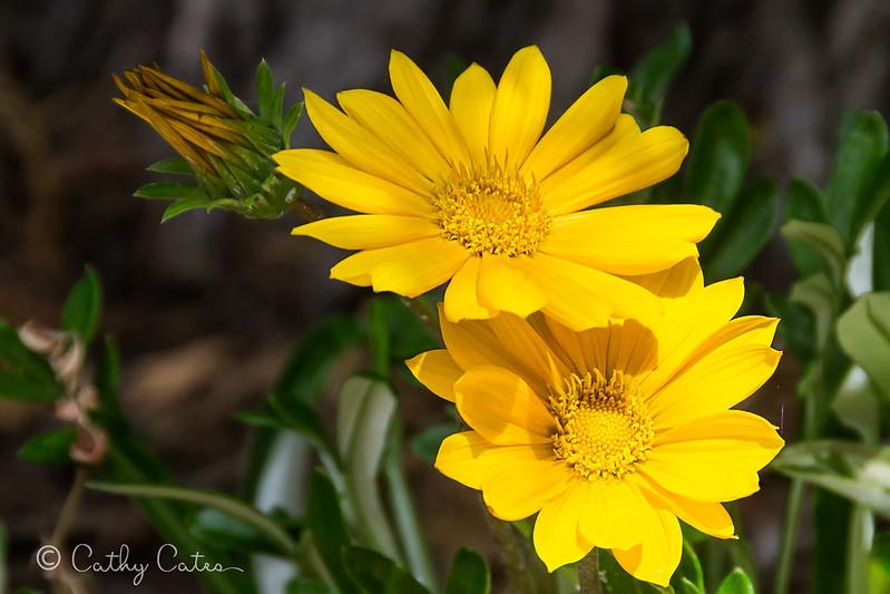 Surprise Flowers
