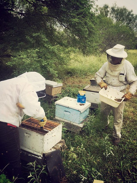Apiary inspections with the State went very well.