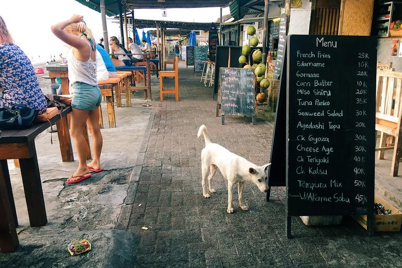 Echo Beach dog Canggu Bali