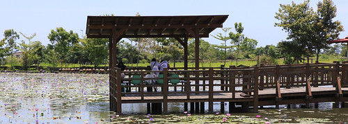 [花蓮] 蓮城蓮花園│周邊景點吃喝玩樂懶人包 (4)