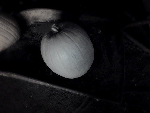 California supermarket pumpkins in the photo app Stackables