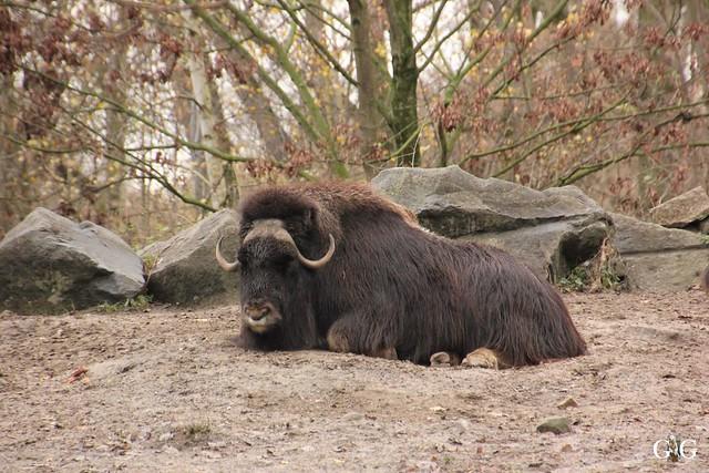 Tierpark Friedrichsfelde 20.11.201622