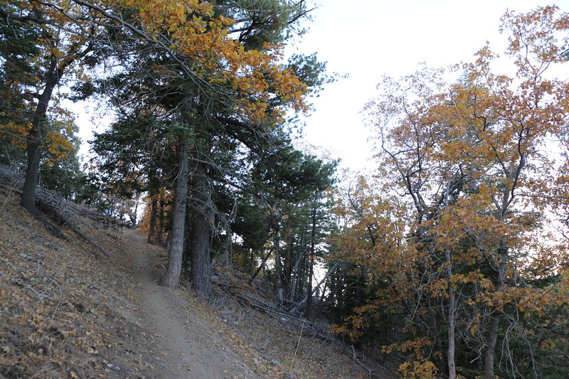 The San Bernardino Peak Trail climbs steadily and switchbacks its way up the slope above Angeles Oaks