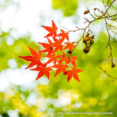 Autumn #03